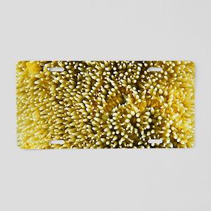 Pillar coral polyps Aluminum License Plate