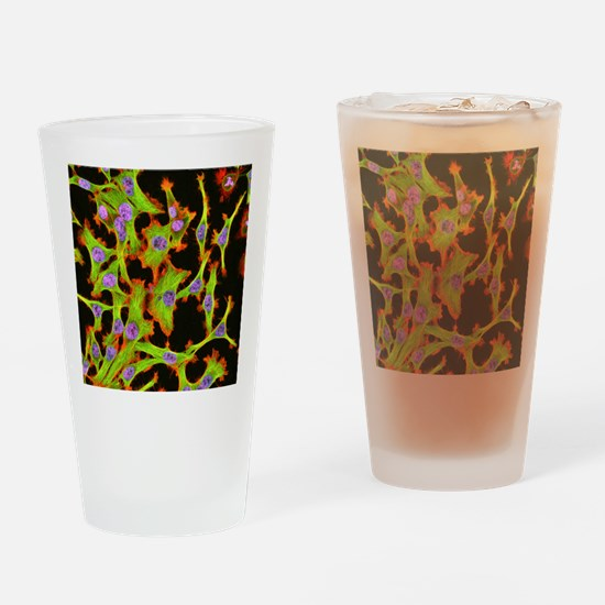 Cultured HeLa cells, light microgra Drinking Glass