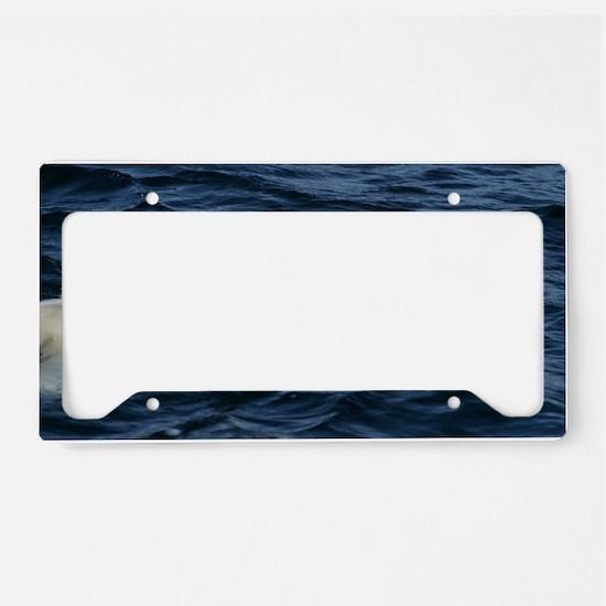 Polar bear swimming License Plate Holder
