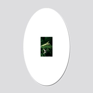 Praying mantis with its shed 20x12 Oval Wall Decal