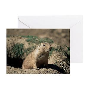 Prairie dog greeting cards cafepress m4hsunfo