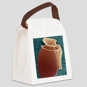 Protozoan, SEM Canvas Lunch Bag