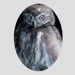 Pygmy owl Oval Ornament