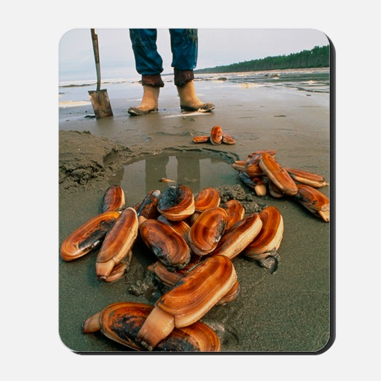 Razor clams dug up on a beach Mousepad