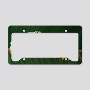 Red-eyed tree frogs License Plate Holder