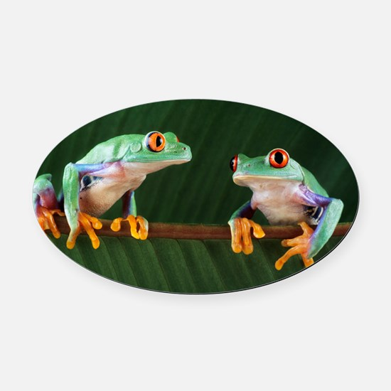 Red-eyed tree frogs Oval Car Magnet