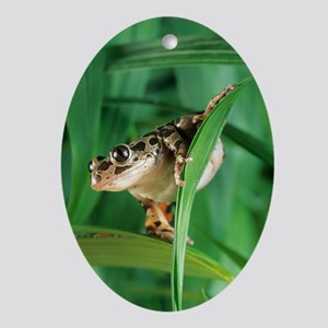 Red-legged pan frog Oval Ornament