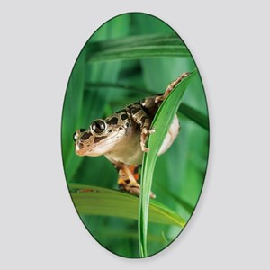 Red-legged pan frog Sticker (Oval)