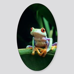 Red-eyed tree frog Sticker (Oval)