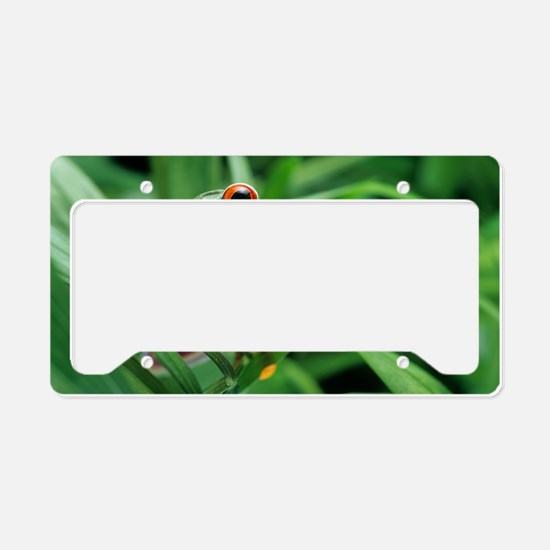 Red-eyed tree frog License Plate Holder