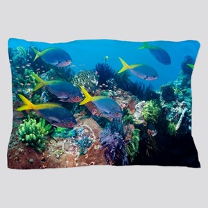Redbelly yellowtail fusiliers Pillow Case