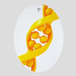 DNA molecule, artwork Oval Ornament