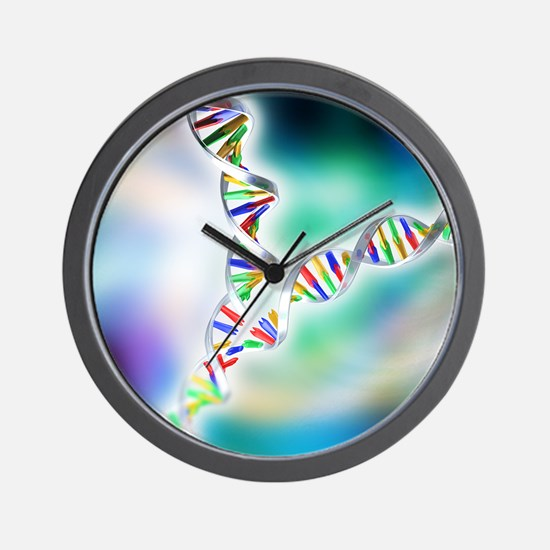 DNA replication Wall Clock