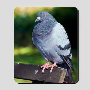 Rock pigeon Mousepad