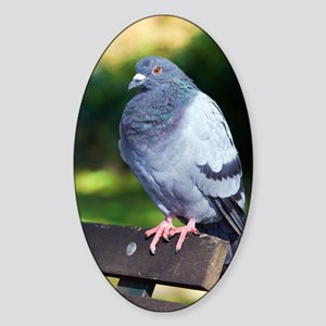 Rock pigeon Sticker (Oval)