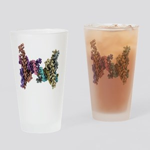 DNA recognition, molecular model Drinking Glass