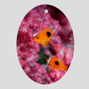 Saddleback anemonefish Oval Ornament