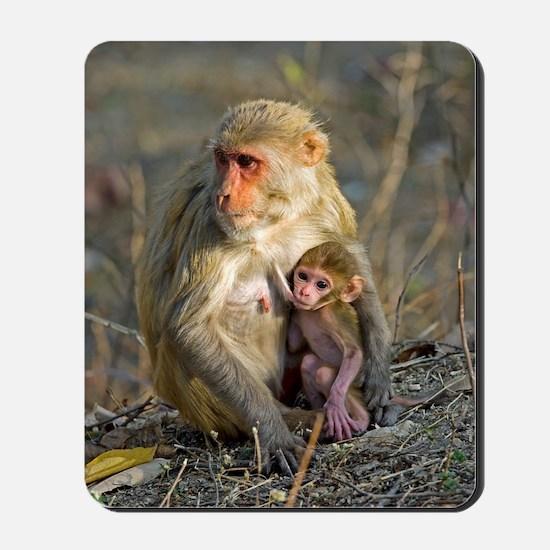 Rhesus monkeys Mousepad
