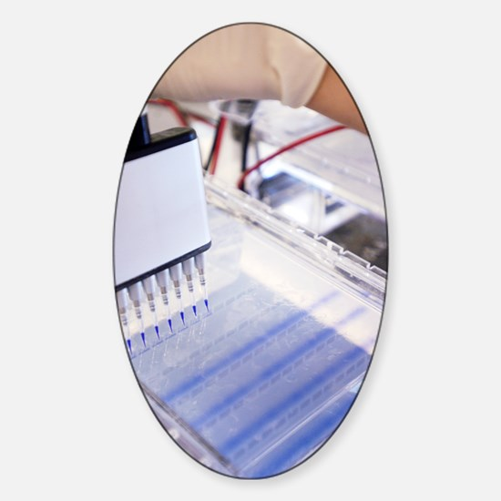 DNA testing Sticker (Oval)