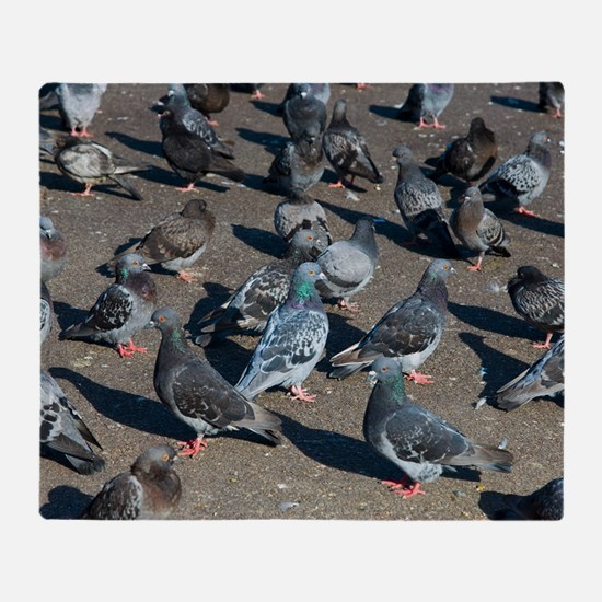 Rock pigeons Throw Blanket
