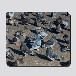 Rock pigeons Mousepad