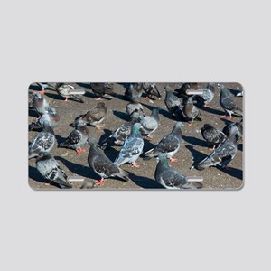 Rock pigeons Aluminum License Plate