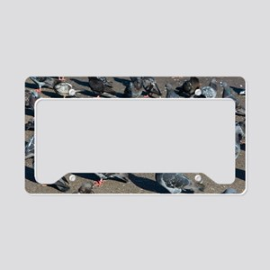 Rock pigeons License Plate Holder
