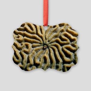 Roughhead blenny in a brain coral Picture Ornament