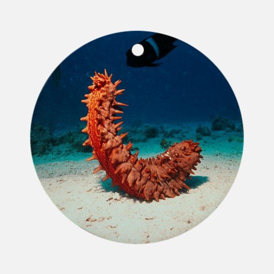 Sea cucumber Round Ornament