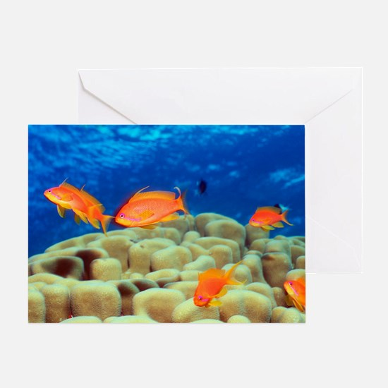 Sea goldie fish over coral Greeting Card