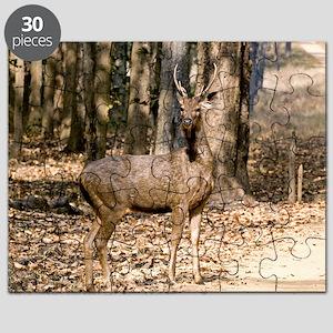 Sambar deer stag Puzzle