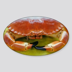 Edible crab Sticker (Oval)