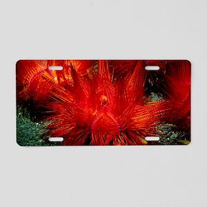 Sea urchins Aluminum License Plate