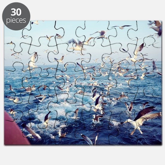 Seagulls Puzzle