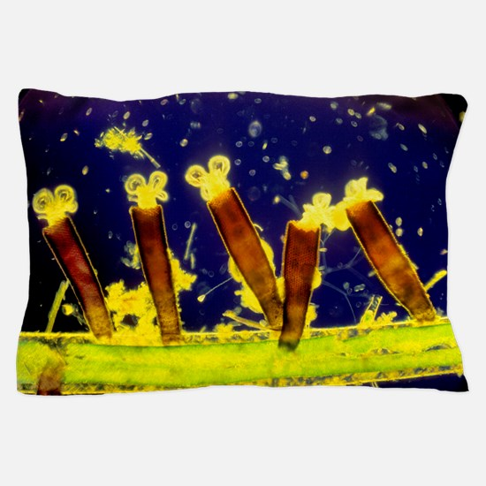 Sessile rotifers Pillow Case