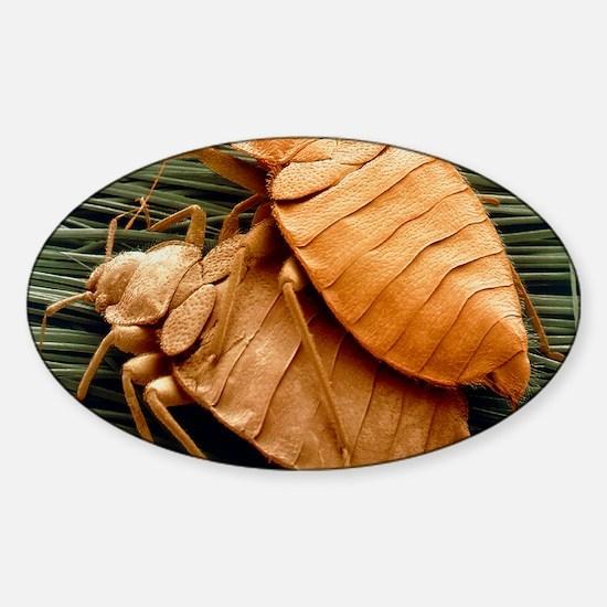 SEM of bed bugs Sticker (Oval)