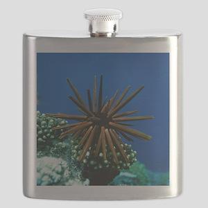 Slate pencil sea urchin Flask