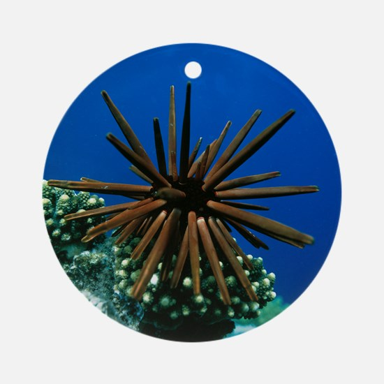 Slate pencil sea urchin Round Ornament