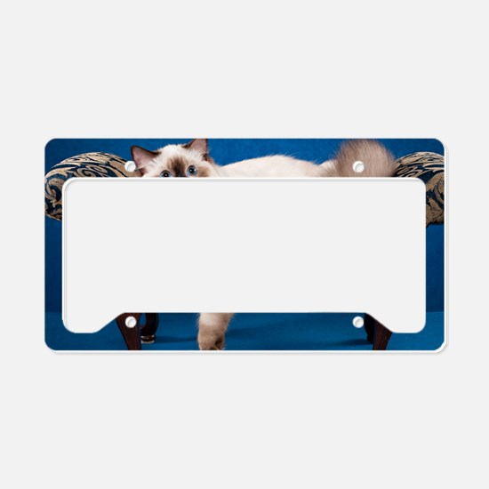 Ragdoll Wall Calendar License Plate Holder