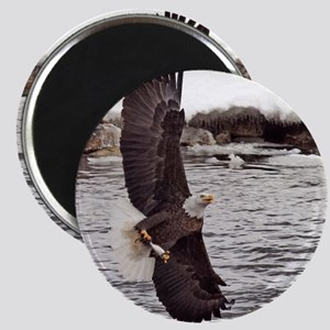 Striking Eagle Magnet