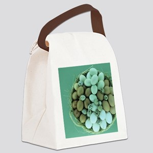 Fresh eggs Canvas Lunch Bag