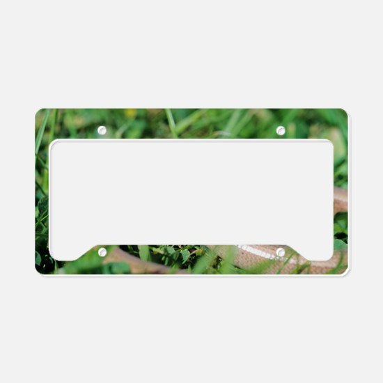 Slow worm License Plate Holder