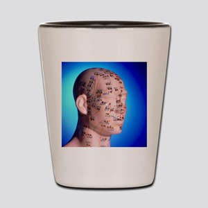 Acupuncture chart on a cast of a head a Shot Glass