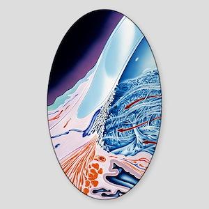 Eye anatomy, artwork Sticker (Oval)