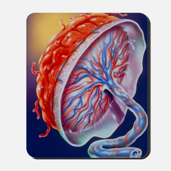 Illustration of the human placenta Mousepad