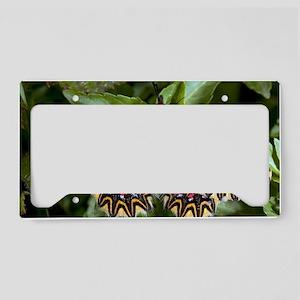 Southern festoon butterfly License Plate Holder