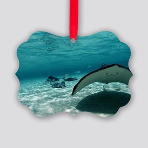 Southern stingray Picture Ornament