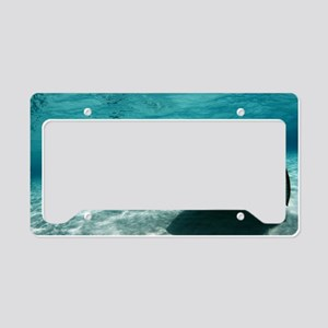 Southern stingray License Plate Holder