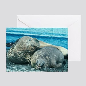 Southern elephant seals Greeting Card