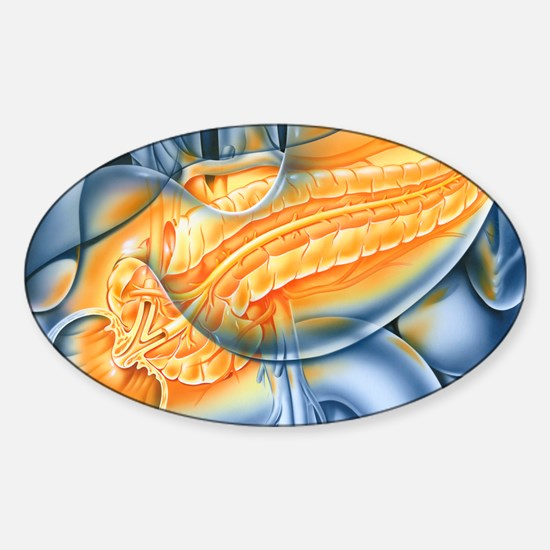 Pancreas Sticker (Oval)